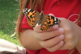 We love our butterfly visits.